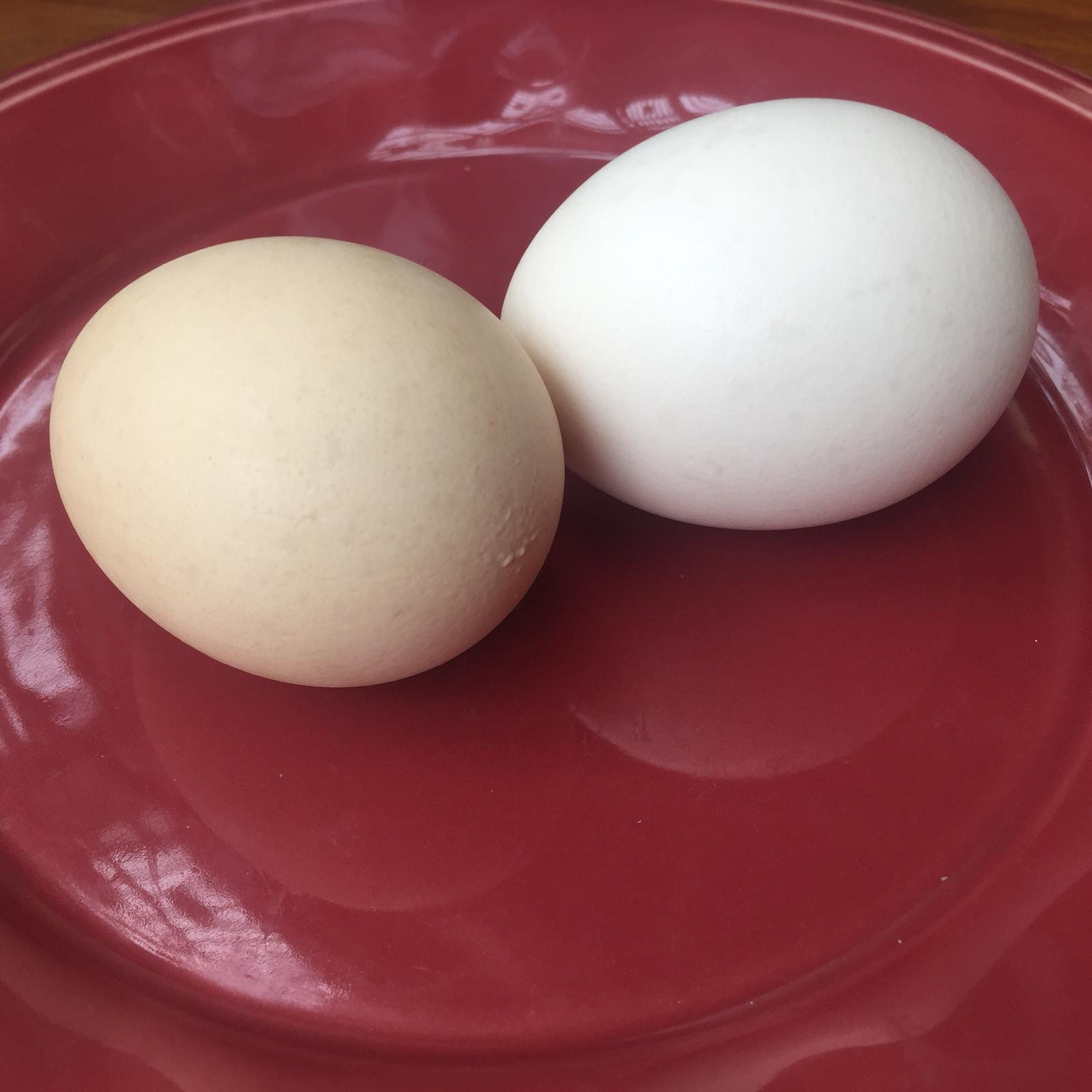 Healthy Egg from Chicken fed with Probiotics (30pcs/box) 益生菌飼養無激素雞雞蛋 (30隻/盒)